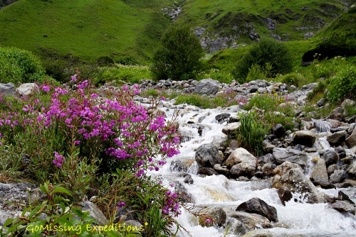 Glacial streams in the Valley of Flowers
