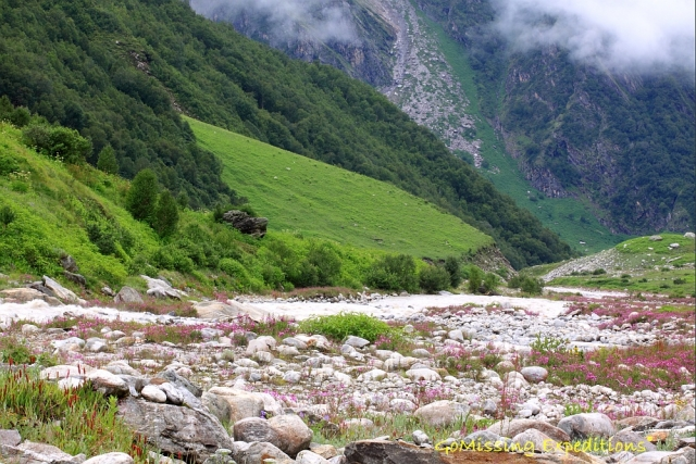Pushpawati river flowing through the valley of flowers, Uttarakhand