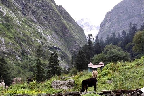 Snow clad peaks in Valley of Flowers, Uttarakhand