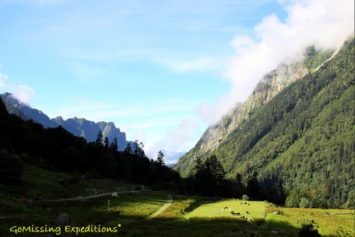 Room with a view - Valley of flowers trek