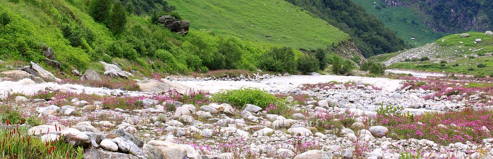 Trekking in valley of flowers
