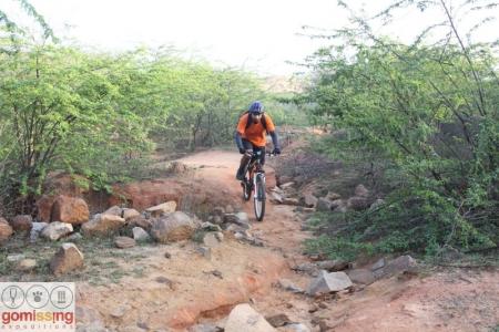 Through the kikar bushes of Asola forest