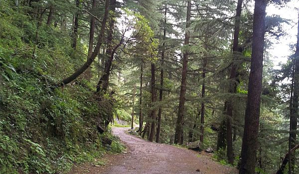 Trekking to triund - the route from Triund to Gallu