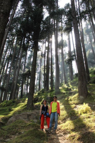 Dense forests around Manali