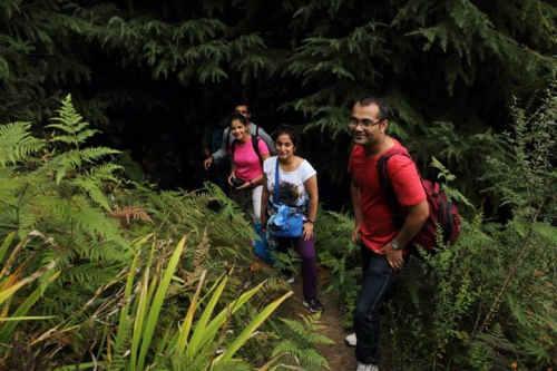 Forest trek near manali