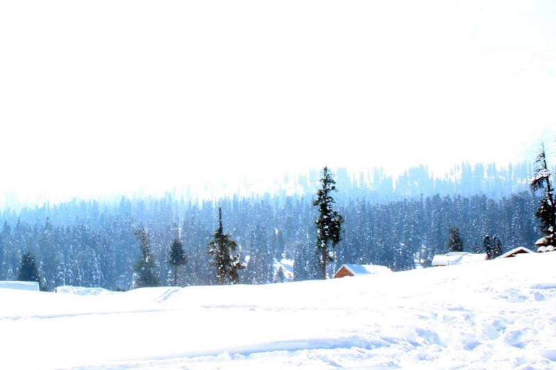 Beginner slopes at Gulmarg