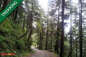 Trek to Triund Dharamshala