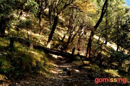 Nag Tibba trek trail