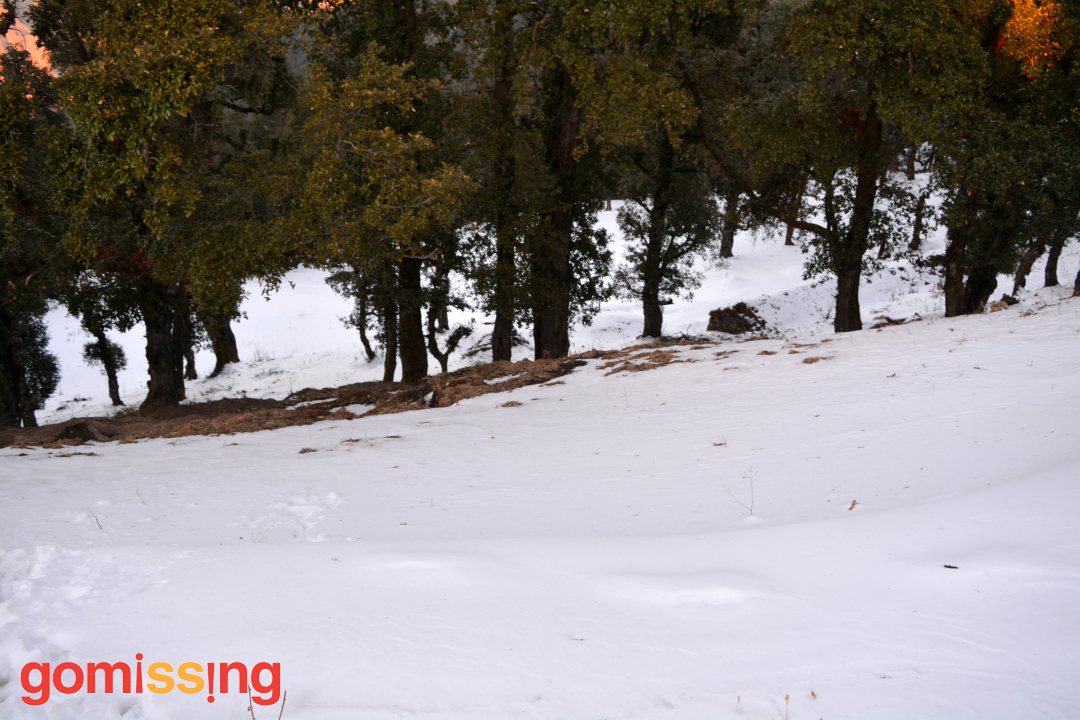 Snow covered Nag Tibba trail