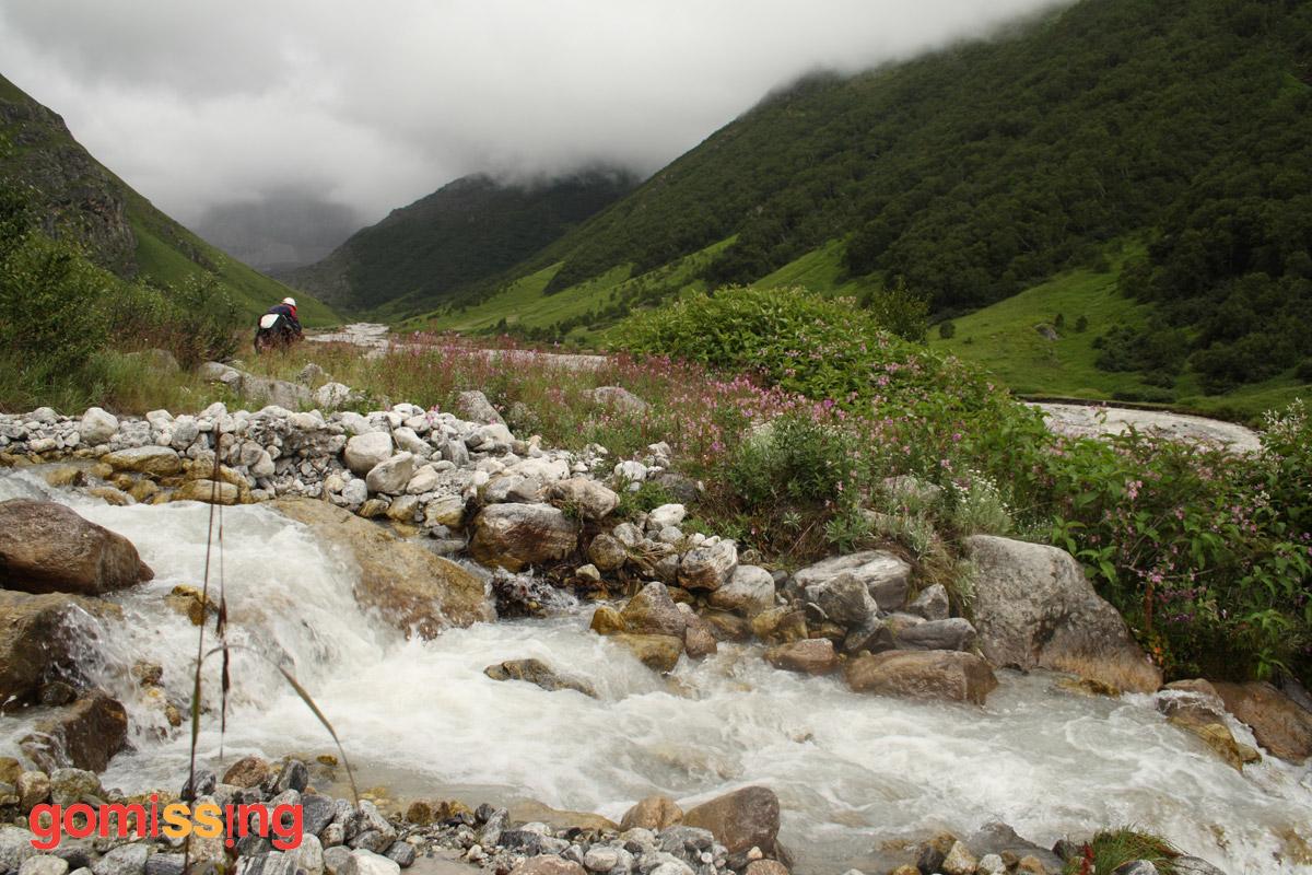Glacial Streams in the Valley