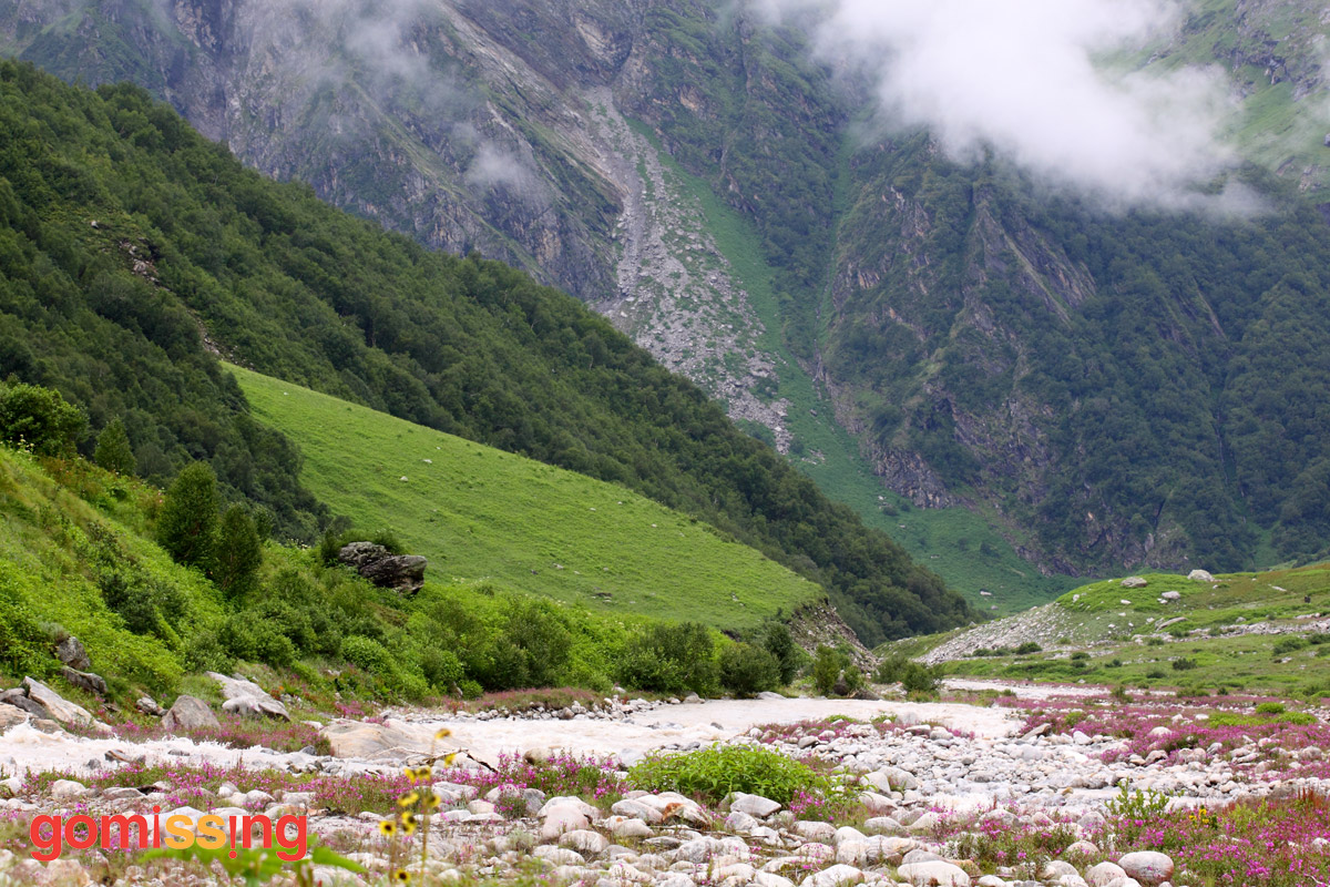 Views in the Valley of Flowers