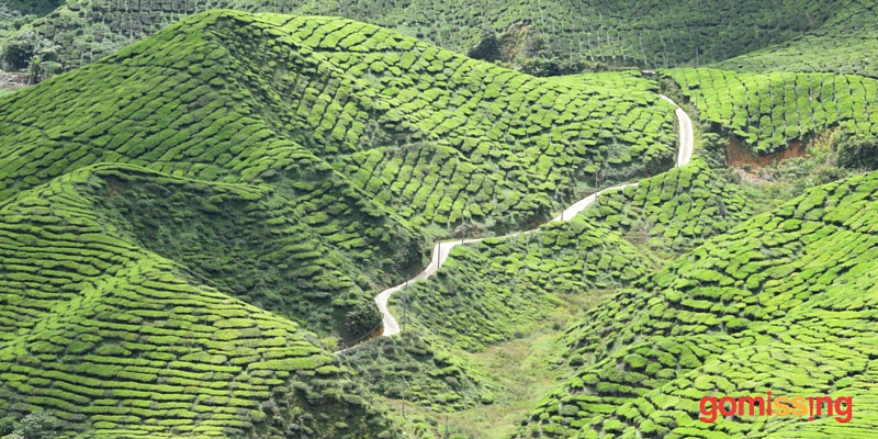 Top Things to do at Cameron Highlands