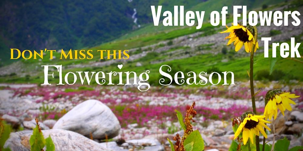 Valley of flowers trekking tour