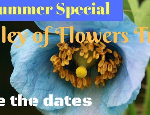 All that you need to know about Valley of Flowers Trek