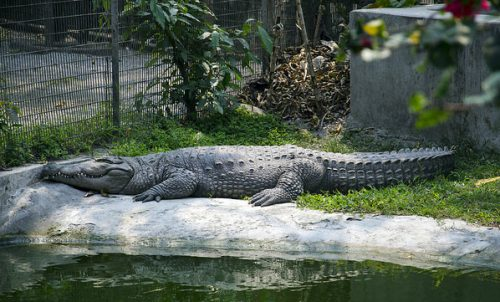 Crocodile Breeding Center, Phuentsholing, Bhutan