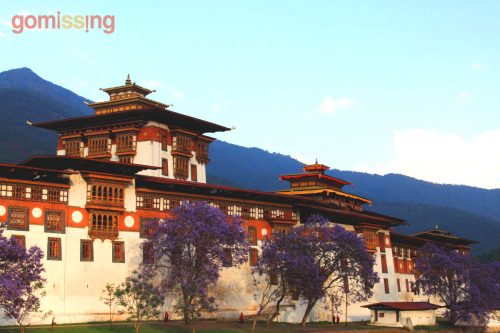 Punakha Dzong, flowers in bloom