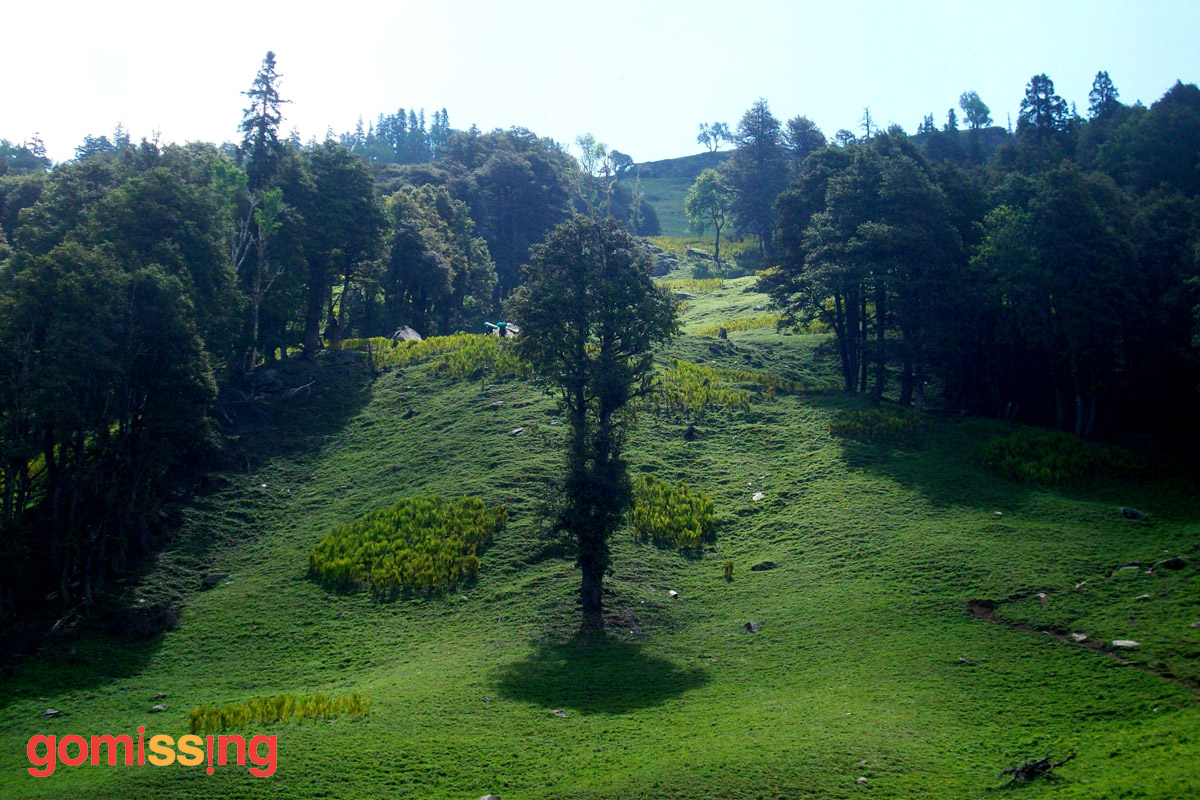 beas kund trek - meadows